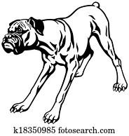 boxer dog black white