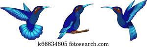 Small hummingbird. Exotic tropical colibri animal icon. Sapphire blue feathers