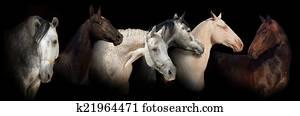 Six horse portrait banner