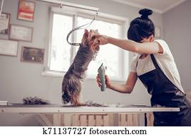 Woman standing near window while shaving little cute dog