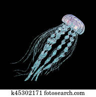 Jellyfish isolated on black background