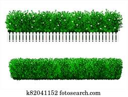Bush in the form of a green hedge