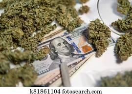 Cannabis in Economics. White background. Marijuana bud and banknotes of dollars. CBD THC herb. Sativa medical health. Money weed. The pot buds. Cannabis money black market.