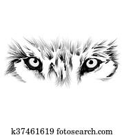 beautiful Wolf face