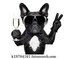 cocktail, hund