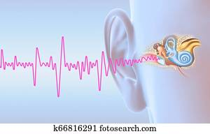 Human ear anatomy with magenta soundwave, medically 3D illustration