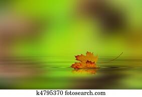 Leaf fallen on the water
