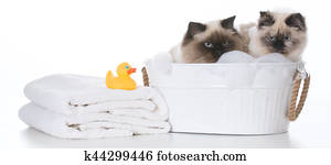 bathing the cat