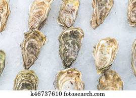 Oysters Images | Our Top 1000+ Oysters Stock Photos ... - photo#21