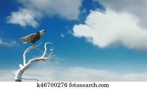 Eagle flying