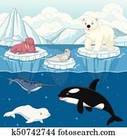 Cartoon wild arctic animal on north pole