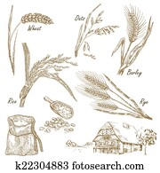 Cereals set. Hand drawn illustration wheat, rye, oats, barley, f