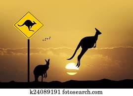 Kangaroo sign caution