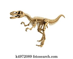 T-rex skeleton isolated
