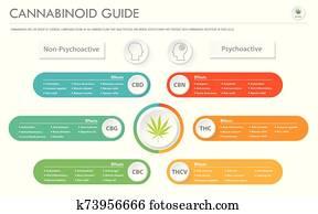 cannabinoid, führer, horizontaler, geschaefts, infographic