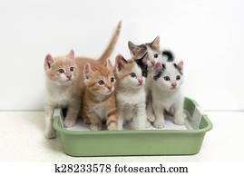 Kittens sitting in cat toilet