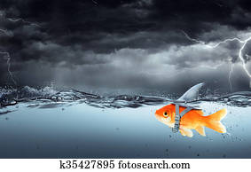 Small Fish With Ambitions Of A Big