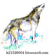 wolf color drawing