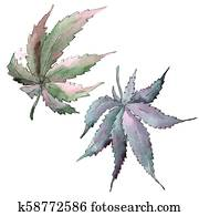 Cannabis green leaf. Leaf plant botanical garden floral foliage.