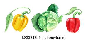 Set of vegetables: cabbage and yellow and paprikas watercolor illustration