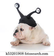 male bulldog wearing silly hat with eyes