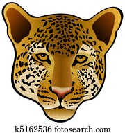 Leopard head isolated