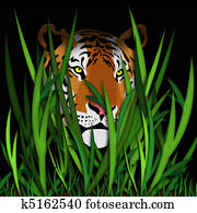 Tiger head in grass