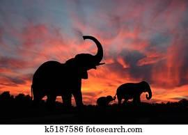 Elephants Silhouette Sunset