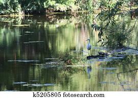 Louisana New Orleans Swamp Scene