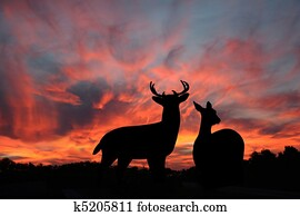 Whitetail Buck & Doe In The Sunset