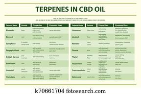 terpenes, in, cbd, oel, horizontaler, infographic
