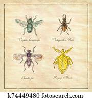 Carpenter Bee, Beetle, Oscinella Frit and Praying Mantis Vintage Collection
