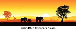 Safari Panorama