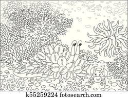 Mollusc and Crab among corals