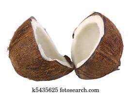 Coconut Still Life Isolated