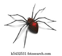 Spider : Black Widow. Isolated on w