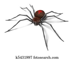 Spider : Black Widow. Isolated.