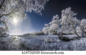 infrared photo of trees and marsh