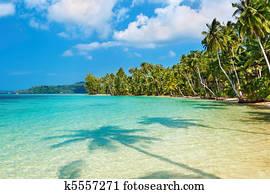 Coconut palms on the beach