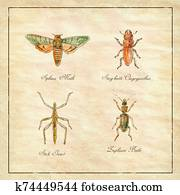 Sphinx Moth, Stag beetle, Stick Insect and Zuphium Beetle Vintage Collection