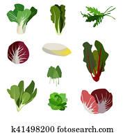 Salad ingredients. Leafy vegetables icons set. Organic and vegetarian illustration with Pak choi, Spinach, Rucola, Radicchio, Indivia belga, Mangold, Sorrel, Romaine, Lettuce and Palla Rossa.