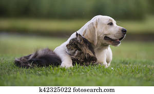 Dog and cat looking in different directions