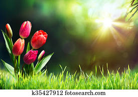 Tulips On Grass In Sunny Meadow Wit