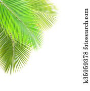 Green coconut leaf frame isolated