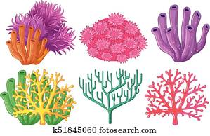 Different types of coral reef
