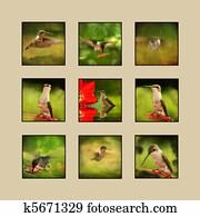Hummingbird Collage