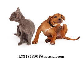 Kitten and Puppy Scratching