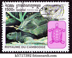 I believe this is a Aldabra Giant Tortoise, Geochelone Gigantea. The stamp is labled megalocheys gigantea which does not exist according to Google.