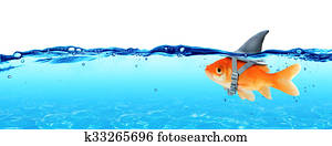 Small Fish With Ambitions
