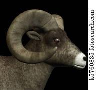 goat sketch illustration